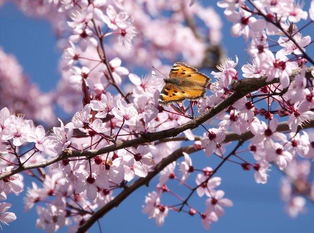 Finzi Lover Not A Lass, Spring