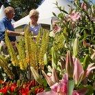 RHS Wisley Flower Show