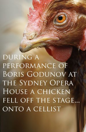 Chicken fact