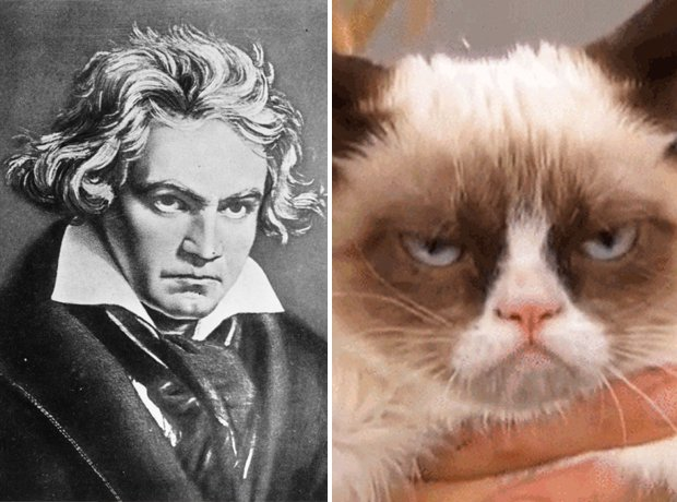 Cat composer lookalike Beethoven