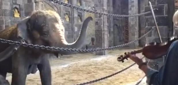 elephant family violin duet
