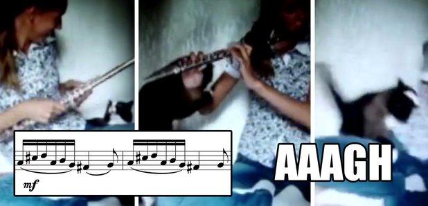 cat attacks flautist
