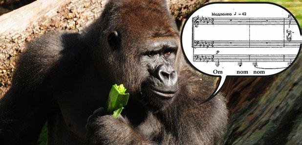 Gorilla singing basso profondo
