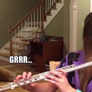 dog hates flute